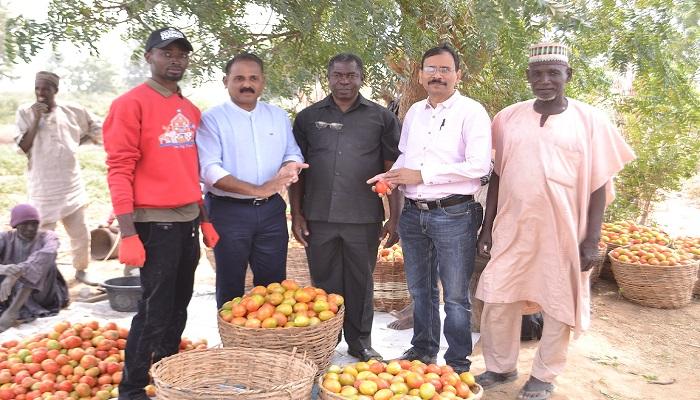 Olam Nigeria's Pilot Farming Project To Boost Nigeria's Tomato Value Chain